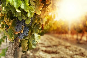 wine tours in berry